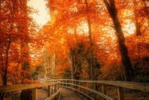 Autumn / My favourite season of all, so magical and beautiful! / by Debby Harriettha