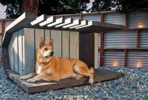 backyard for dogs