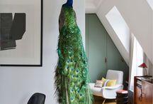 bird taxydermy decor
