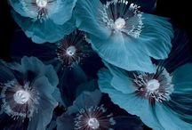 Pretty Things / by Nicole Shaw