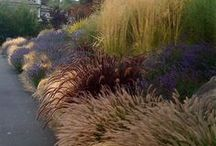 giardini di graminacee