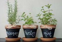 Herb garden  / by Tracie Stanley
