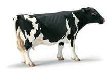 Toy Cows / Toy Cows of all shapes, sizes and materials - if you like cows you'll love this board