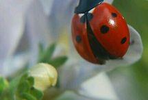 Ladybird Place