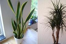Planter til at rense luften indendørs