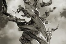 ALBERI - foglie - BOSCHI - foreste / alberi in genere