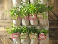 Organic Gardening & Green Paradises