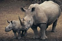 Wildlife - Facts / Facts About Wildlife