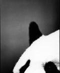 Animal Book / by Jess Van Allen