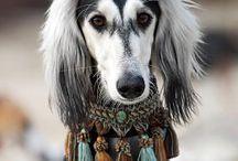 Hunderassen aus Afrika / Die Afrikanische Hunderassen: Armant , Azawakh, Aïdi, Basenji, Boerboel, Coton de Tuléar, Rhodesian Ridgeback & Sloughi