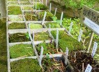 hortas naturais