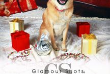 Pets / Samples of Glamour Shots pets portraits. / by Glamour Shots
