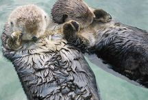Wildlife Facts & Pics / Anecodotes, facts, sayings, pics all related to wildlife
