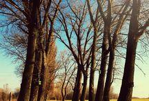 Fotóim - my photos