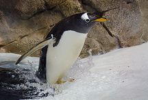 Missouri Zoos / Discover the animals that reside in Missouri Zoos.  / by VisitMO