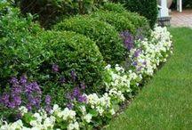 Outdoor garden tips / by JoAnne Gordon