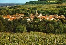 VINEYARDS - BURGUNDY