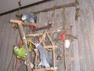 hračky pre papagje
