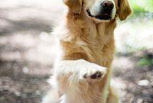 Smiley the blind dog