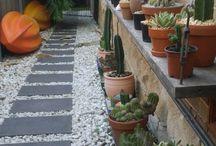cactus garden / Cactus
