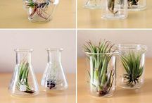 Plants / Lovely ideas for decoration in my house ... what I want to try in my free time