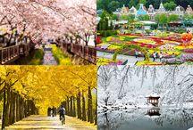 Korea 4 Season