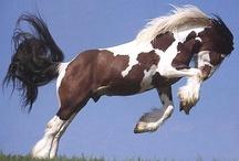 Skoki's Exceptional Equine Picks