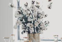 Cotton - Pamut növény