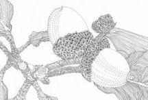 Acorns and Oak Trees