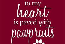 Pet Quotes!!! / Pet quotes, words, sayings, quotes, poems, stories