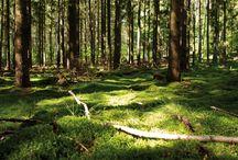 Wildes Mecklenburg / Bilder rund um das Thema Jagd, Wild und Wälder in Mecklenburg Vorpommern.