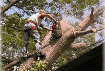 Austin tree removal