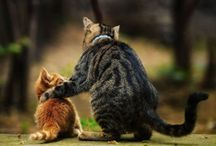 Furry Love / I ♥ all animals, but I have a special love for the kitties! / by Barbara Anne