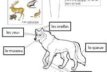 le loup, fiche documentaire