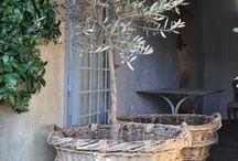 French garden ideas / French garden ideas