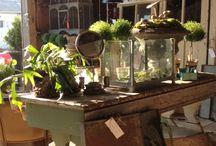 Garden Center Ideas