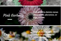Langue de Fleur