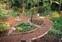 Sustainable Agriculture & Regeneration / Sustainable and regenerative agriculture uses farming techniques that protects the environment, public health, communities, and animal welfare. This board explores approaches for regenerating land, soil and communities through permaculture, organic farming, agroecology, agroforestry, etc