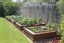 Gardens - Veges