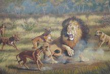 Rhodesian Ridgeback Mia