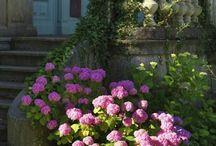 Outdoor / Jardins, terasses, balcons, nature