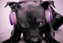 More on Audiobooks
