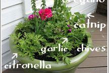 garden stuff / by Carrie Knight