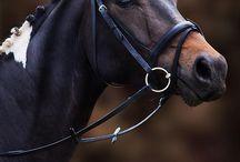 horses / a kedvenc állatom