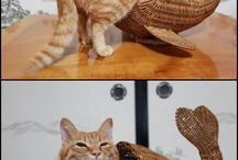 Cats / Cats are amazing