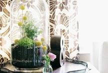 Terrariums / Quirky inside gardens