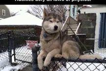 Dogs ❤️❤️❤️