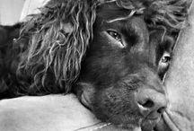 Chiens et chats photos en noir et blanc