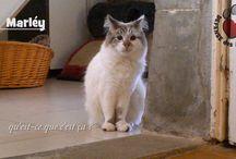 Vidéos : amis à 4 pattes à la recherche d'une famille / les vidéos des chats du refuge la Maison des Chats