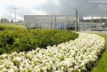 Gdynia w kwiatach / Gdynia in flowers